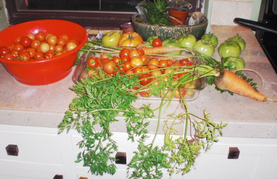 Happy-Bungalow-garden-fresh-tomato-carrot