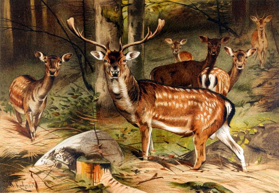 Vintage animal illustration DEER