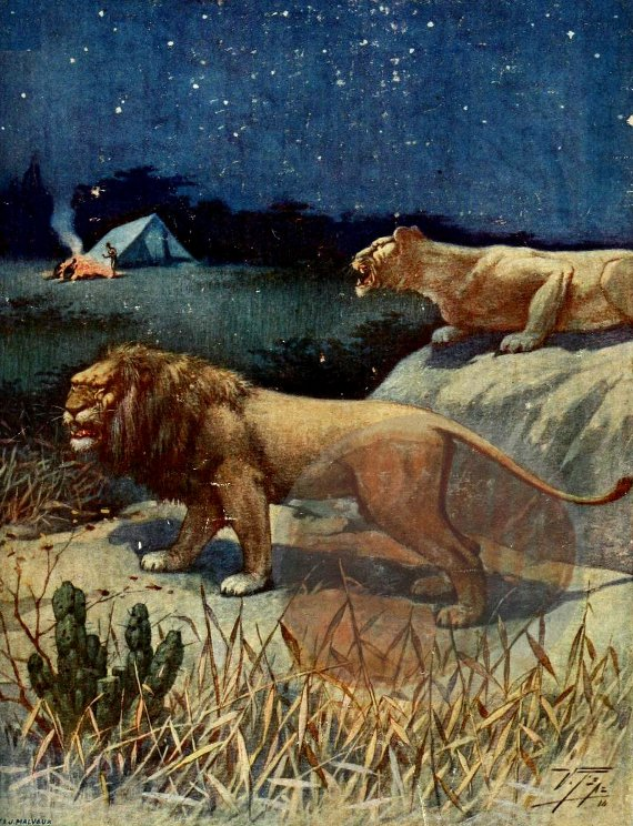 French Book Coverpainting- Lions Stalking Campsite