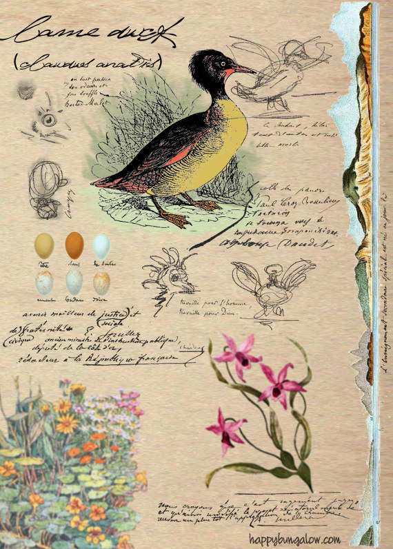 not quite real vintage illustration of duck and flowers