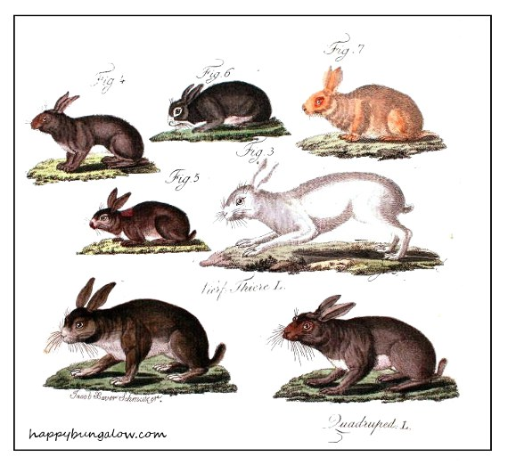 vintage rabbit sketches